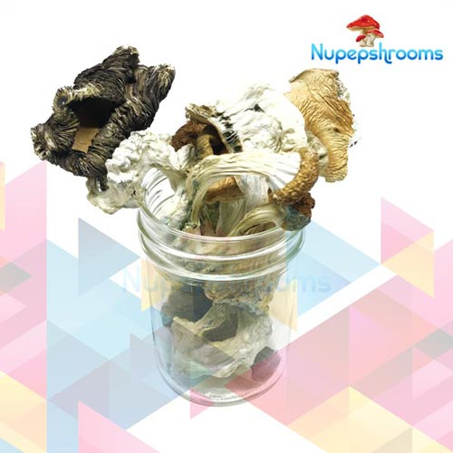 Amazonian Cubensis Mushrooms