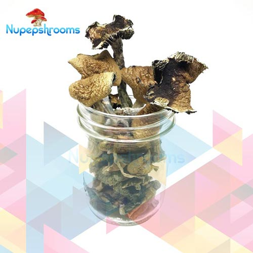 Brazilian Magic Mushrooms