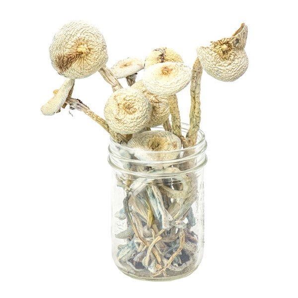 Rustic White Magic Mushrooms