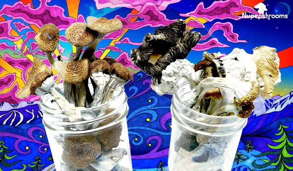 Magic Mushrooms Dosage Guide