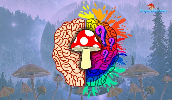 Magic Mushrooms: What Effects Do They Have On My Brain?
