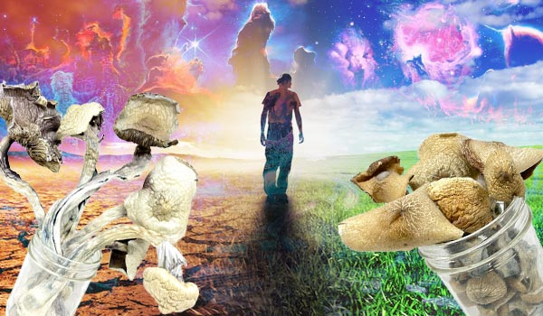 HOW MAGIC MUSHROOMS WILL CHANGE YOUR LIFE FOREVER