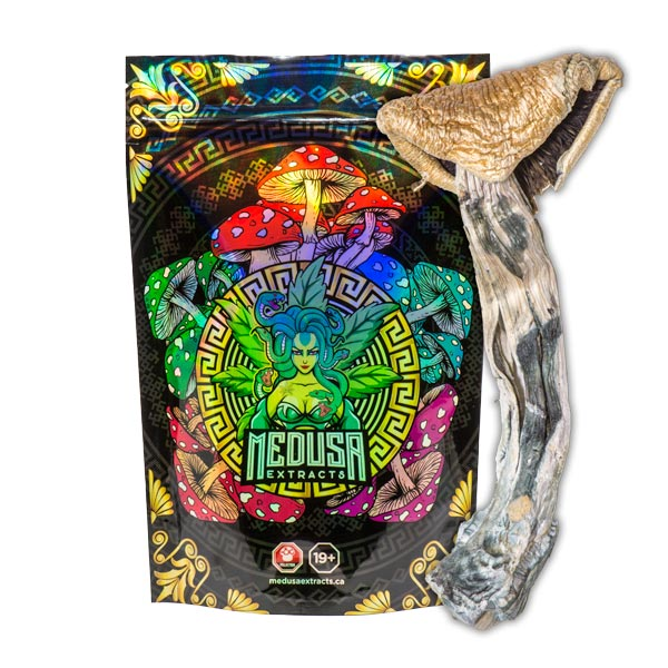 Golden Teachers Magic Mushrooms | Medusa Extracts