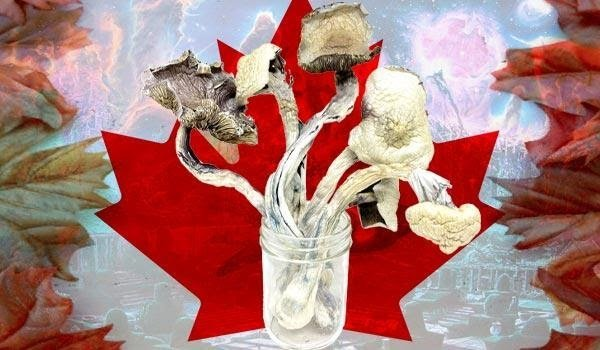 Why you should buy your magic mushrooms in Canada